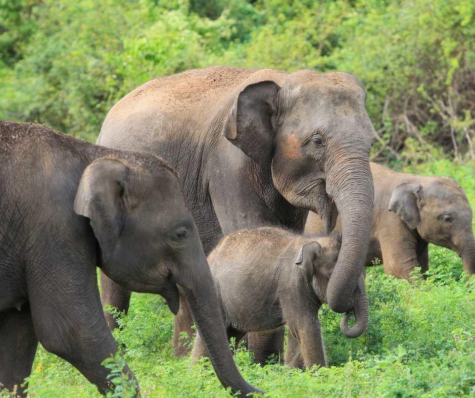 Lunugamwehera National Park